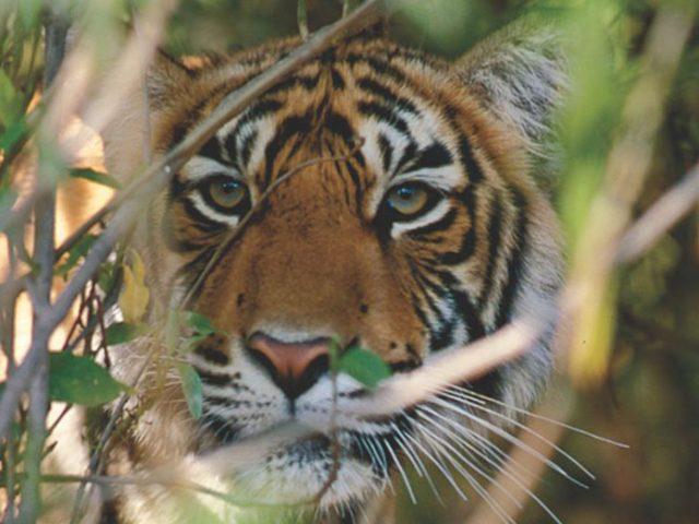 https://www.karnatakatravel.com/wp-content/uploads/2019/11/wildlife_and_ayurveda_tour-640x480.jpg